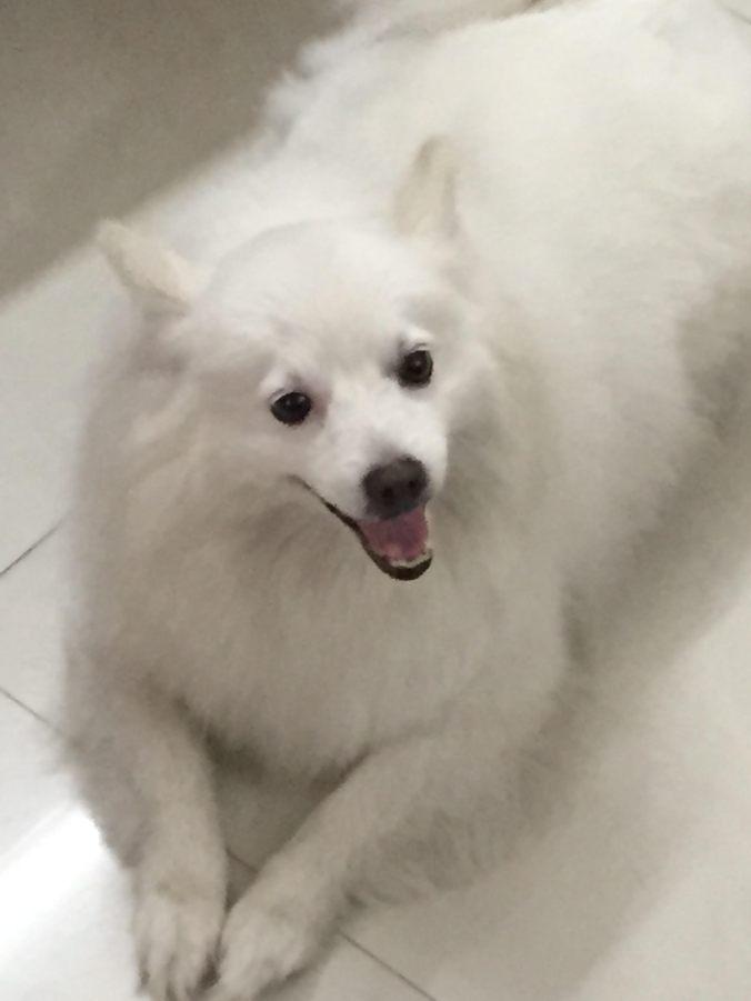 Chakku , fresh after her bath