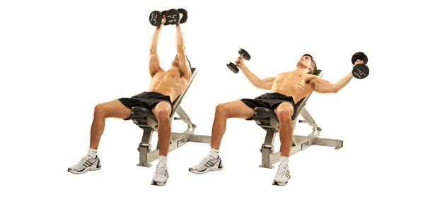 Incline Bench Flys Dumbbells